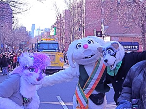 rapid t rabbit st pats parade queens